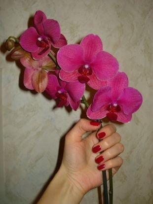 Осенний дизайн ногтей, маникюр красным лаком на коротких ногтях